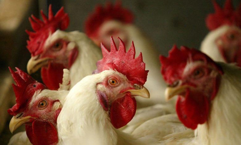 Ex-Pilgrim's Pride executives indicted in chicken price-fixing case