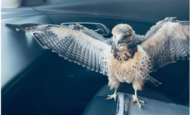 Aurora Police Officer Helps Bird Hit By Car – CBS Denver