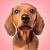 Talking Dogs 1.2.0 Mod Apk (unlimited money)